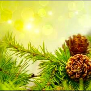 Fraser fir scented candle